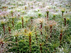 Turpmāk varēs saņemt atbalstu meža atjaunošanai arī spēcīgu lietavu vai sausuma gadījumos