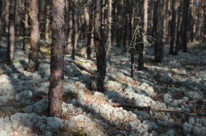 Meža īpašnieki aicināti izteikt viedokli par saimniekošanu īpaši aizsargājamās dabas teritorijās