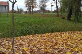 Dvietes parkā un Bebrenes muižas parkā atjaunots stādījumu fonds